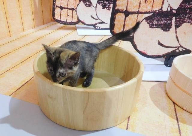 江戸ねこ茶屋で、猫遊郭にハマる予感【辛酸なめ子の東京アラカルト#16】
