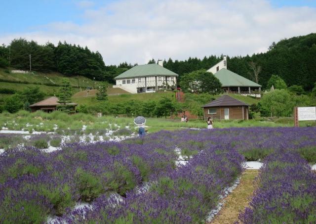 美しい紫色の世界! まきばの館にラベンダーシーズンが到来