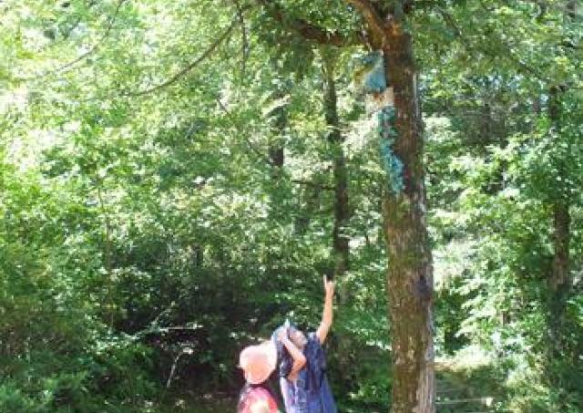 森のパワーを体に! 森林セラピーとヨガイベント開催