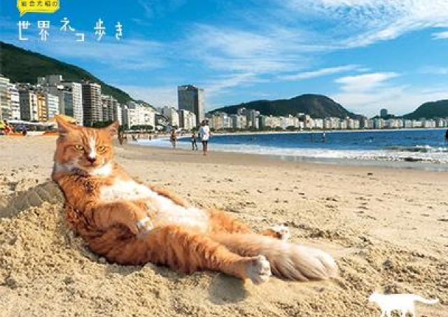 イワゴーネコワールドを満喫!「写真展 岩合光昭の世界ネコ歩き2」