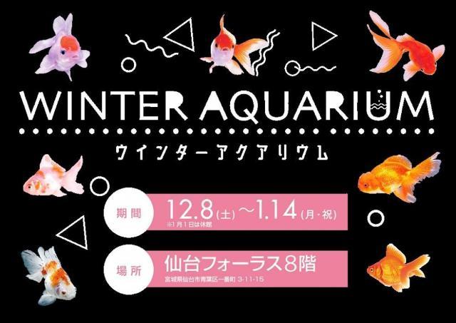 色とりどりの金魚を幻想的にライトアップ!