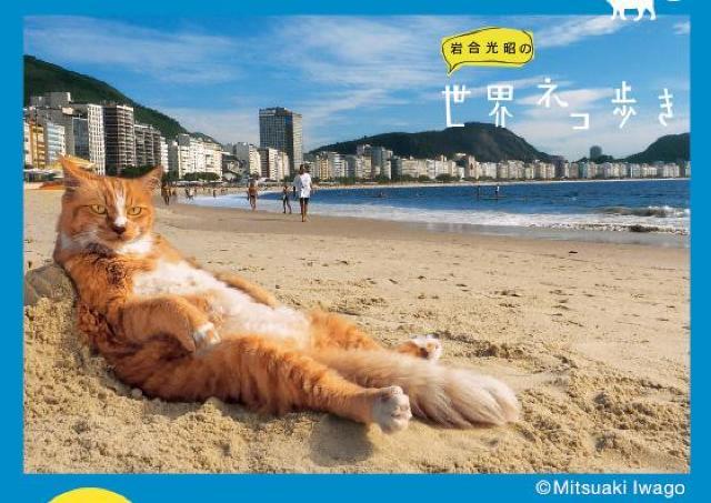 特別な贈り物のようなしぐさを見せるネコたちの写真がいっぱい!