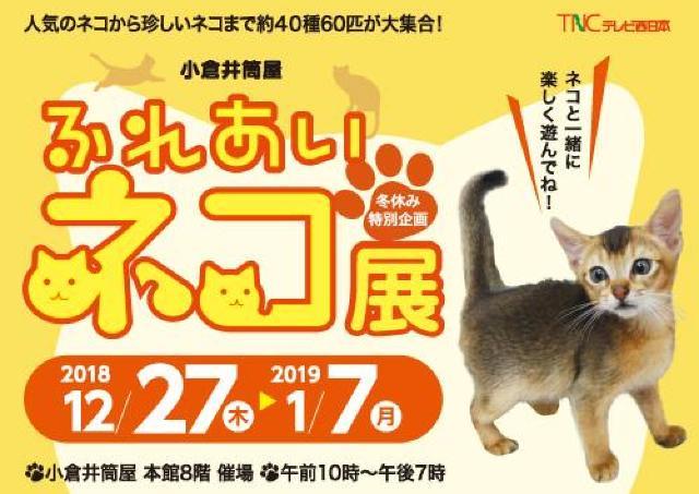 人気のネコや珍しいネコ約40種60匹、小倉井筒屋に大集合!