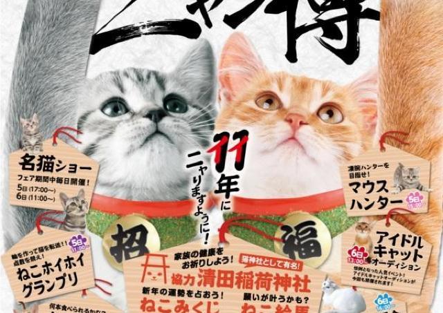 北海道最大級の猫の祭典が今年もやってくる!