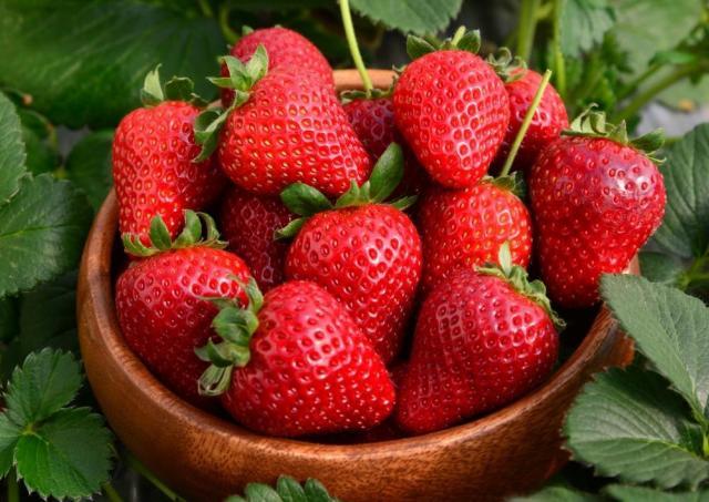 全国のブランドイチゴを無料配布! 「Strawberry Festival」恒例行事が今年も