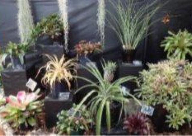 不思議な植物「エアプランツ」の魅力って?