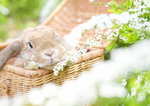 癒やし...。SNSで人気のウサギちゃん見においで。