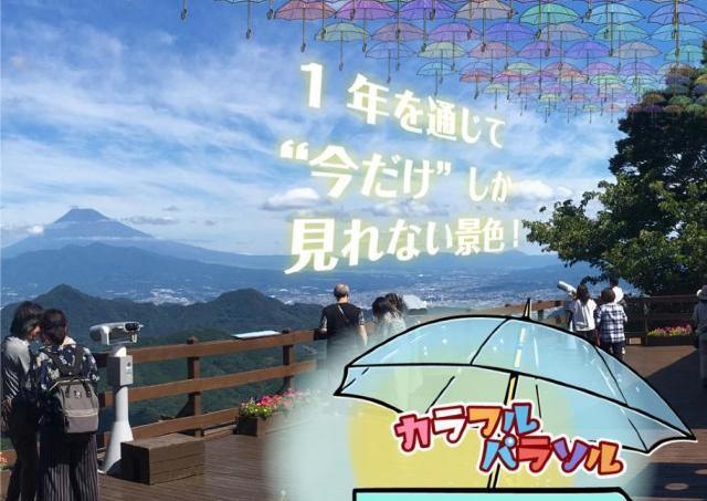 色とりどりの傘が梅雨空を飾る。今だけしか見られない景色