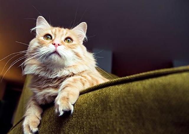 猫好きのための究極のニヤニヤ空間が出現!