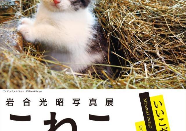 世界の子ネコ写真展! 約150点の作品に景品付きスタンプラリーも