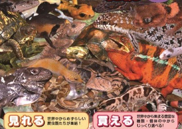 会える、触れる,買える! 北海道最大の爬虫類展示会