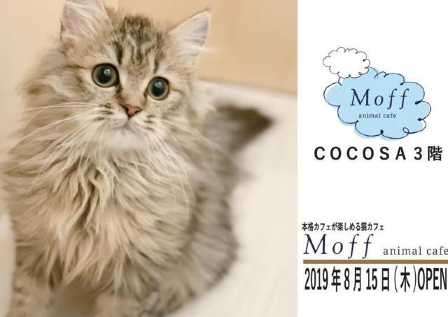 可愛い猫ちゃんに会える! 熊本にアニマルカフェ誕生。