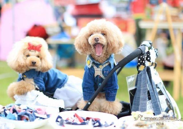 南東北最大級! 愛犬と一緒に楽しむアウトドアイベント
