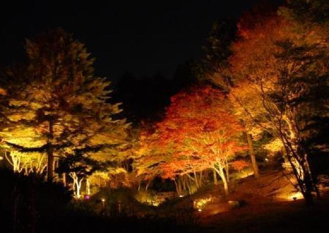 植物園で「夜の紅葉散策&ザ・ナイト・ミュージアム」開催
