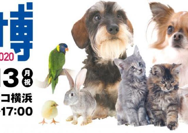 ペット同伴可能の「pet博」 パシフィコ横浜で開催