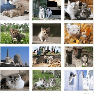 癒しの境地...! めちゃかわ子猫クリアファイルもらえるよ。シャノアール行かなきゃ。