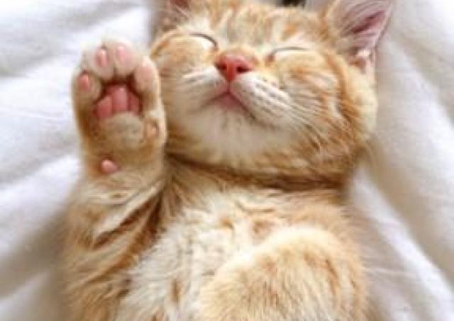 ネコ好き必見! グッズ約500種類の「だいまる猫まつり」