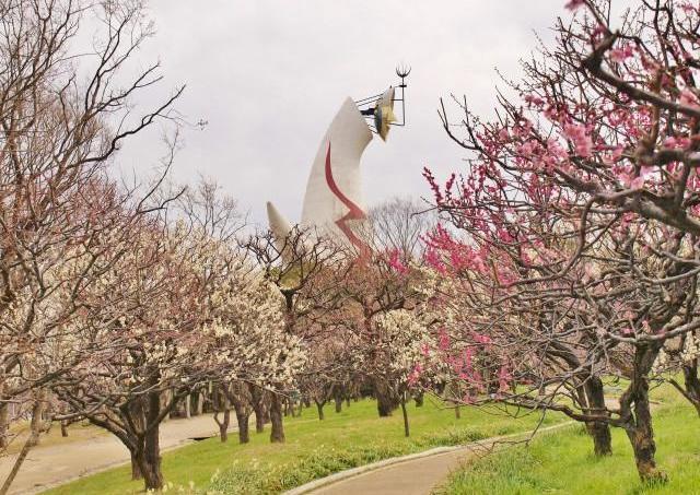 万博記念公園、600本以上の梅が順々に見ごろに