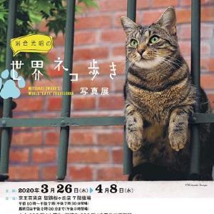 ネコの魅力を発信! 毎年好評のネコのイベント「ねこフェス」