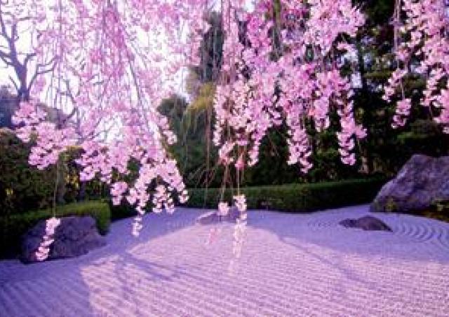 非公開エリアも観られる! 名店の精進料理と桜を楽しむ、妙心寺退蔵院の観桜会