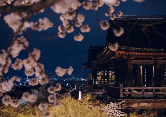 満開の桜と清水寺のコラボレーション「清水寺 夜の特別拝観」