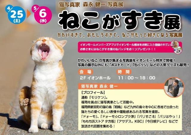 かわいい写真で癒される「ねこがすき展」 イオンモール熊本