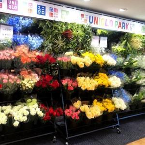 一束390円。 ユニクロで「生花」売ってるって知ってた?
