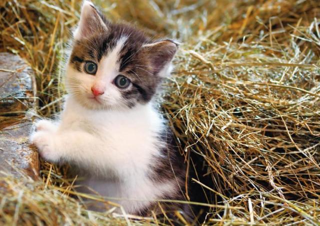 世界のかわいい子ネコに癒される「岩合光昭写真展 こねこ」