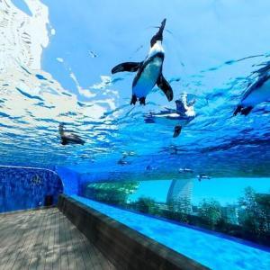 サンシャイン60展望台&水族館 「都民の日」は入場料が20%オフ!