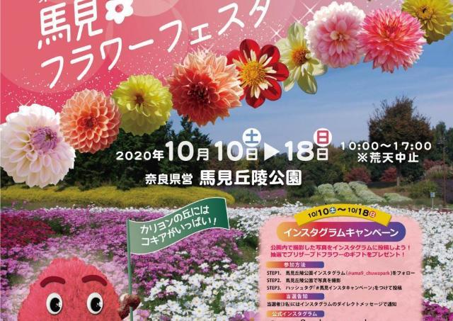 120種のダリアやコスモス、コキアが咲き誇る