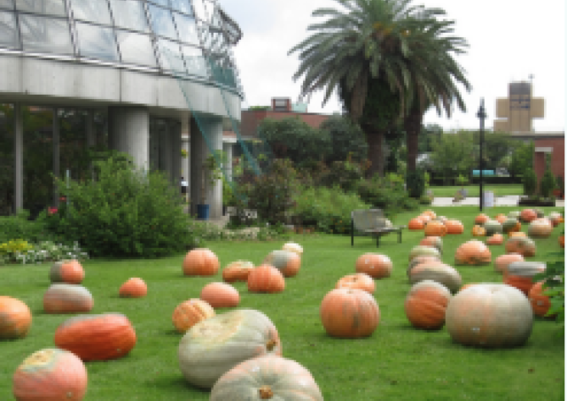 「夢の島熱帯植物館」に巨大おばけカボチャ出現