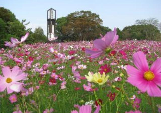 秋桜の季節に初の夜間開園 熊本市動植物園