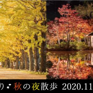 昭和記念公園で紅葉鑑賞。 夜はライトアップ演出も