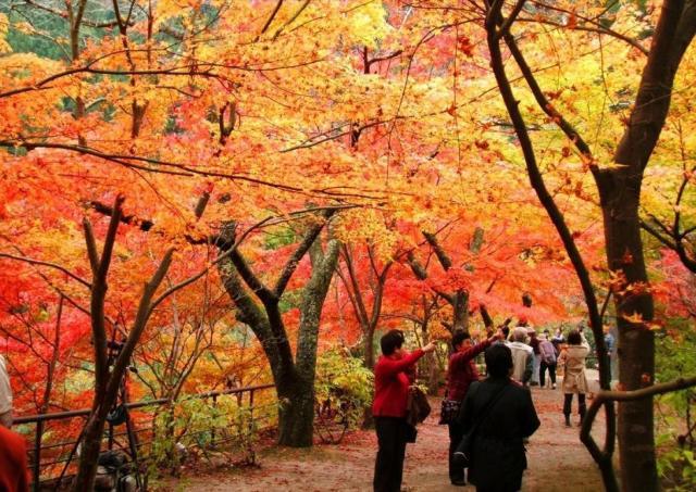 幻想的なライトアップ...奥津渓に紅葉の季節