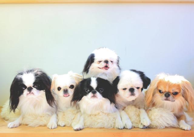 かわいい鼻ぺちゃ犬に癒される写真展