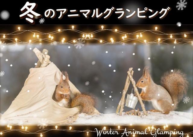 動物たちに癒される。冬のグランピング体験