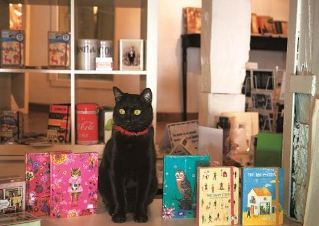 世界のネコたちのかわいいしぐさに癒される 岩合光昭写真展