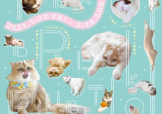 猫の可愛さがたっぷり詰まった展覧会 浅草橋で開催