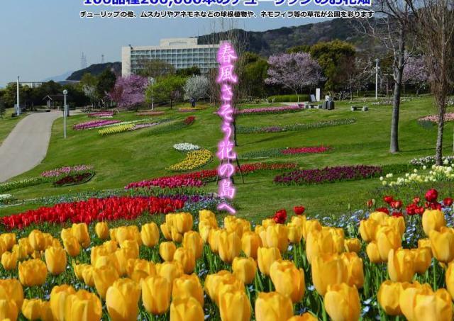 約20万本のチューリップが咲き誇る春の景色