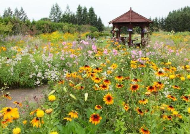 広大なお花畑「紫竹ガーデン」が開園
