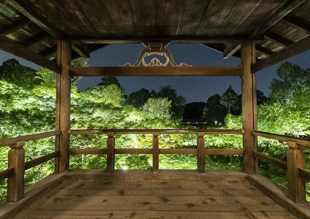渓谷の青もみじと国宝「山門」がある東福寺をライトアップ