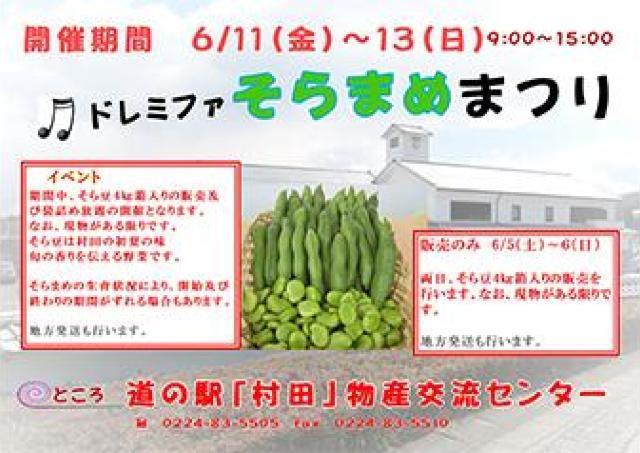 そらまめは村田の初夏の味 「そらまめまつり」開催