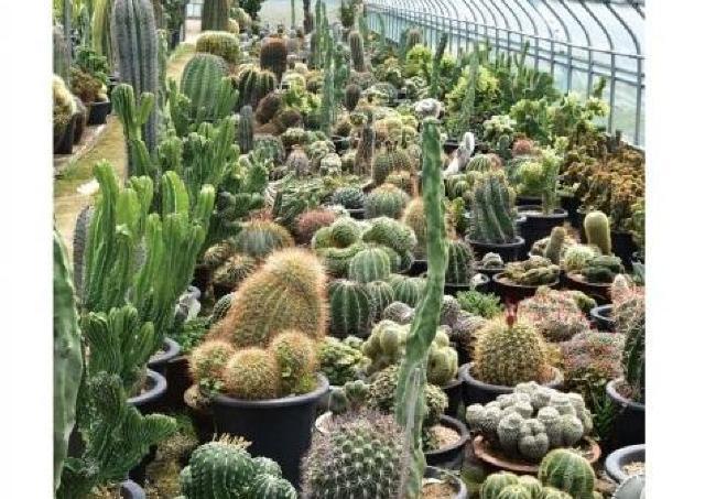 国内外の個性あふれる植物150点!「叢」パセーラに期間限定オープン
