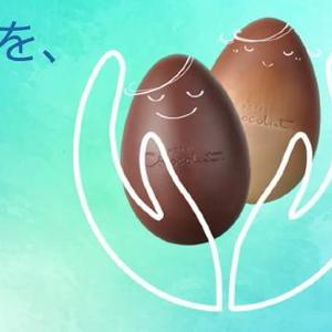 「ホテルショコラ」の食べごろのチョコが半額セール!お得にフードロス削減に貢献。