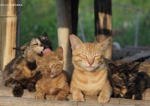動物写真家・岩合光昭が撮った世界中のネコの家族愛